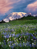 Sunrise with wildflowers and Mt. Rainier. Mt. Rainier National Park, Washington