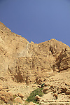 Dead Sea valley, Salvadora Persica tree (Toothbrush tree, Mustard tree) in Nahal salvadora