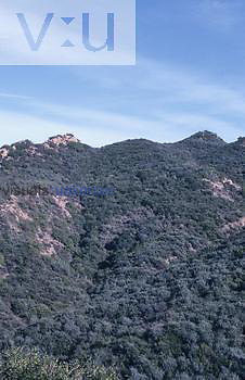 The Chaparral biome, Santa Monica, Mountains, California, USA.
