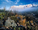 Snow on the Santa Catalina Mountains near Finger Rock Canyon North of Tucson Arizona USA