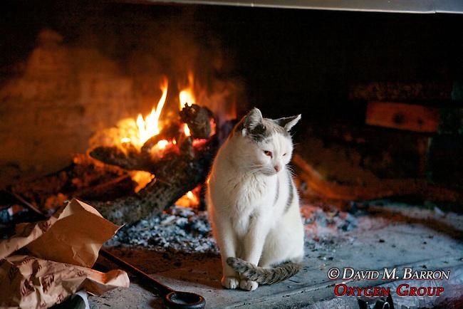 Blancita Staying Warm in the Fireplace