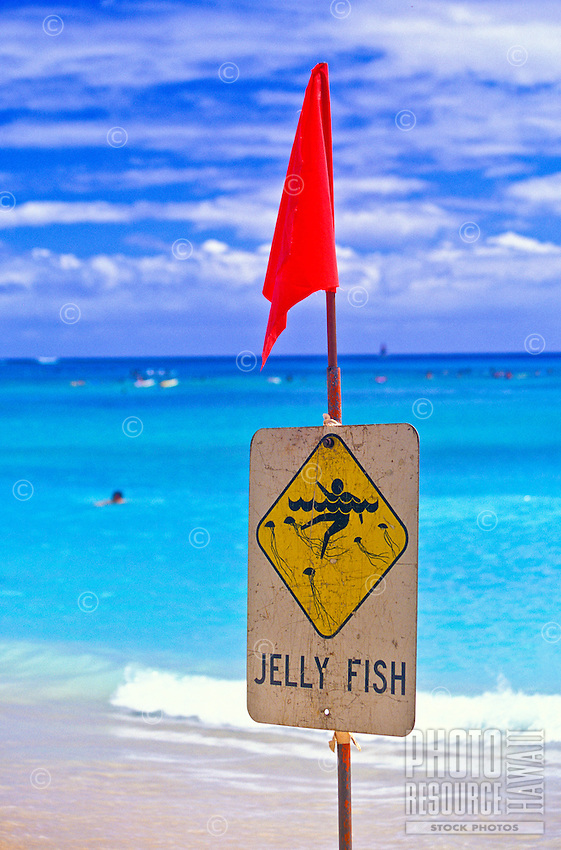 Jellyfish warning sign posted on beach in Hawaii. A health alert to those allergic to jellyfish venom.