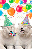 Samantha, ANIMALS, REALISTISCHE TIERE, ANIMALES REALISTICOS, funny, photos+++++Party Tigers master,AUKP55,#a#
