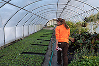 "While the ground outdoors is brown and still frozen indoor greenhouses around the city are greening up for a spring break through. After 19 years as DeGroot's Nursery grower Jackie Robinson still gets excited heading into spring. She said working in the greenhouse, even when temperatures are freezing outdoors with snow blowing feels like spring. ""It's a great place to be,"" she said. Preparing for an April 1 start-up in the showroom is a busy time. She will plant upwards of 500,000 veggie seeds by hand which equates to 110,000 plants for sale. A majority of vegetable plants are single seeded which equates to an enormous amount of time and effort. Pansey seeds were started in December and will be ready for April 1 too."