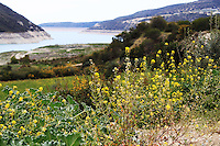 Stock photo : Cyprus landscape with hills, river and wildflowers in the foreground.