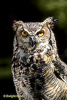 OW06-011z  Great Horned Owl - Bubo virginianus