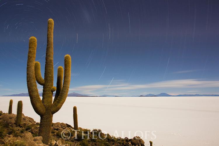 Bolivia, Altiplano, Salar de Uyuni, rare cactus forest (Echinopsis tarijensis) on Isla Inkahuasi, exposure at night during full moon, star trails