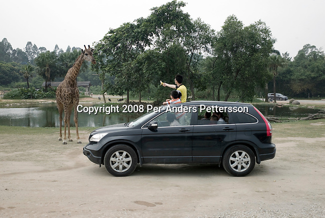 GUANGZHOU, CHINA OCTOBER 3: Chinese tourists tries to feed a giraffe from a car at an African Savanna park at Chimelong Paradise Theme Park on October 3, 2008 outside Guangzhou, China. The park has a self-drive safari with animals from around the world. Chimelong is one of the best and most popular amusement parks in China with attractions such as a driving safari, animal shows and the biggest rollercoaster in the world with 10 loops. Millions of Chinese took a weeklong break during the National Holiday and one of the Golden weeks during the year. .Chinese people love theme parks and new ones are opening constantly. It's estimated that there's about 2400 theme parks in the country. (Photo by Per-Anders Pettersson) ..