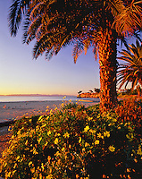 Seascape of Santa Barbara Point and Ledbetter Beach at sunrise with palm trees. Santa Barbara, California.