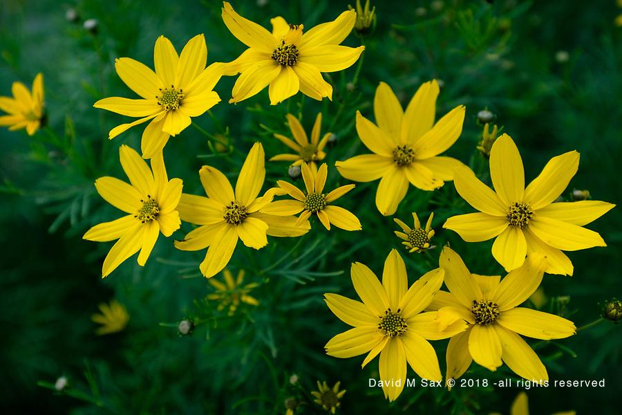 6.30.17 - Yellow....
