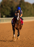 October 05 2018 : War of Will gallops at Keeneland Racecourse on October 05, 2018 in Lexington, Kentucky. Evers/ESW/CSM