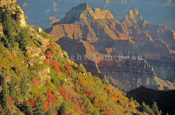 Brahma and Zoroaster Temples with Autumn Color, North Rim of Grand Canyon National Park, Arizona, AGPix_0152 .