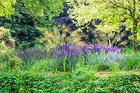 France, Indre-et-Loire (37), Azay-le-Rideau, parc et château d'Azay-le-Rideau au printemps, massif de vivaces au bord de l'Indre avec, sétaire vert clair (Setaria), Descampsia, Nepeta 'Walker's Low', sauges des bois 'Caradonna' (Salvia nemorosa 'Caradonna'), stippa géant