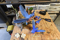 NWA Democrat-Gazette/FLIP PUTTHOFF<br />A bluebird carrying nesting material        Aug. 11 2017     is a project Wolfe is working on.