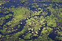 Flooded forest, Beni Department, Amazonia, Bolivia