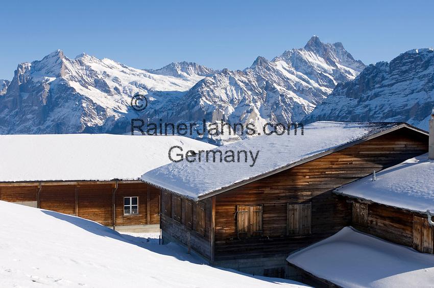 CHE, Schweiz, Kanton Bern, Berner Oberland, Grindelwald: Skihütten im Maennlichen Skigebiet mit Schreckhorn (4.078 m) | CHE, Switzerland, Canton Bern, Bernese Oberland, Grindelwald: Ski huts at Maennlichen ski area with Schreckhorn (4.078 m)