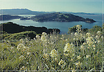 FB 69.   Angel Island State Park