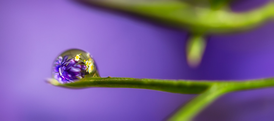 purple flower refraction