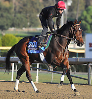 Mexikoma, trained by Michael Dilger, trains for the Breeders' Cup Juvenile at Santa Anita Park in Arcadia, California on October 30, 2013.