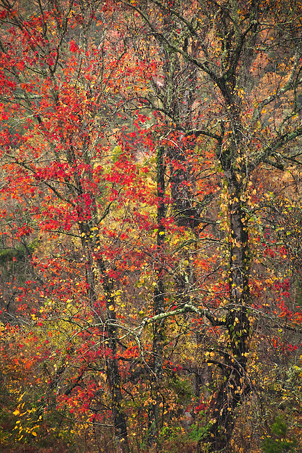 Autumn colors, Pickens County, South Carolina
