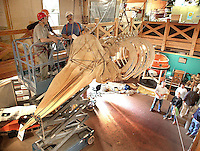 Hanging the skeleton of a sperm whale