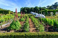 France, Loir-et-Cher (41), Cheverny, château de Cheverny, le jardin bouquetier, poireaux en fleurs, ipomée, dahlia, tagètes, tomates 'Fournaise', amaranthes