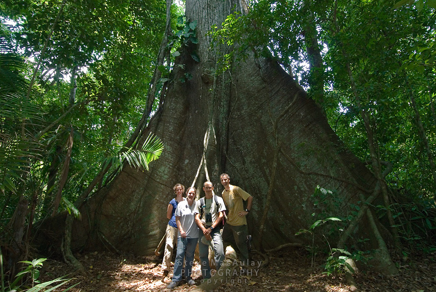 Tourist group and guide posing in front of massive Ceiba tree, Smithsonian Tropical Research Institute, STRI, Barro Colorado, Lago Gatun, Panama