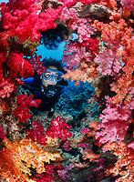 WH1305-D. Scuba diver (model released) looks through a natural window in the coral reef around which colorful soft corals (Dendronephthya sp.) thrive in these current-swept, nutrient-rich waters. Fiji Islands, Pacific Ocean.<br /> Photo Copyright &copy; Brandon Cole. All rights reserved worldwide.  www.brandoncole.com