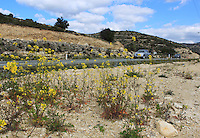 Beautiful hilly highway of Cyprus, cars passing by and wild yellow flowers grown on the side of the road.