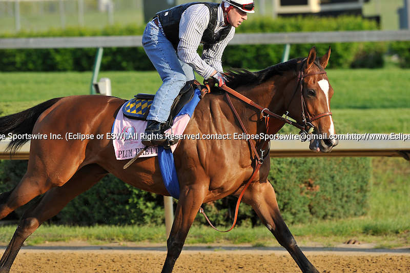Plum Pretty on the Churchill Downs track on April 30, 2011.