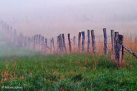 Fence across foggy meadow<br /> Cades Cove<br /> Great Smoky Mountains N.P. TN