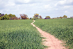 Winding uphill path crossing crop field, Shottisham, Suffolk, England, UK