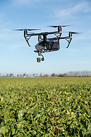 Drone in flight above sugar beet - Lincolnshire, November