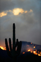 Aug. 14, 2012; Desert mountain sunset sky fire cloud wildfire smoke cactus Saguaro Mandatory Credit: Mark J. Rebilas