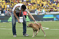 BARRANQUILLA - COLOMBIA - 05-09-2017:  Un trabajador retira a un perrro del campo de juego durante partido entre Colombia y Brasil por la fecha 16 de la clasificatoria a la Copa Mundial de la FIFA Rusia 2018 jugado en el estadio Metropolitano Roberto Melendez en Barranquilla. / A worker retires a dog from the field during the match between Colombia and Brazil for the date 16 of the qualifier to FIFA World Cup Russia 2018 played at Metropolitan stadium Roberto Melendez in Barranquilla. Photo: VizzorImage/ Gabriel Aponte / Staff