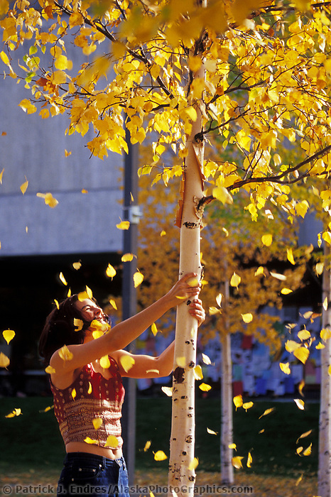 UAF student enjoys the wonder of autumn at the UAF campus and shakes birch leaves from a tree in the plaza.