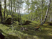 FOREST_LOCATION_90018