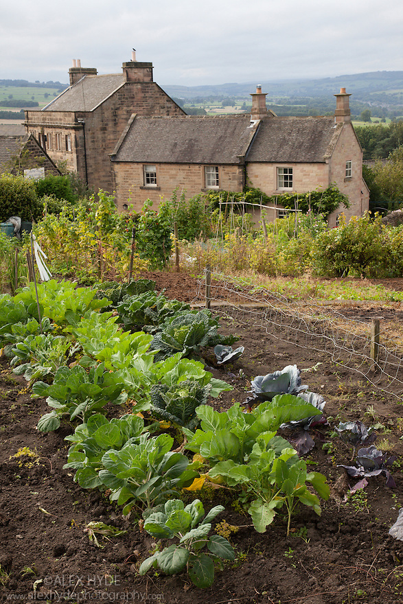 Village allotment, Stanton-in-Peak, Peak DIstrict National Park, Deryshire, UK.