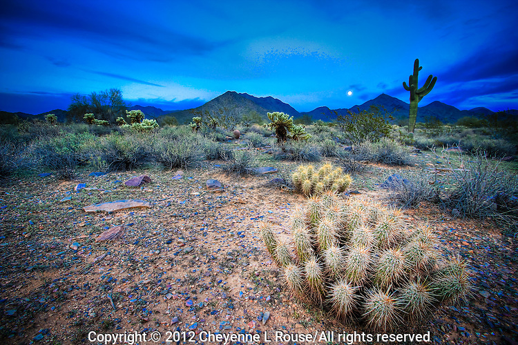 Hedgehog Cactus and Full Moon - Arizona - McDowell Mountains - Scottsdale