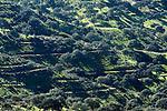 Landscape, Mediterranean Habitat for Iberian Lynx, Sierra de Andujar Natural Park, Sierra Morena, Andalucia, Spain