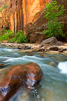 Hiking the Narrows through the Virgin River in Zion National Park Utah is the most popular in the park.  One is treated to beautiful steep cliffs and cooling waters.