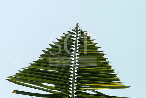 Aldeia Baú, Para State, Brazil. Deatail of Amazon palm leaf. sailing ship?