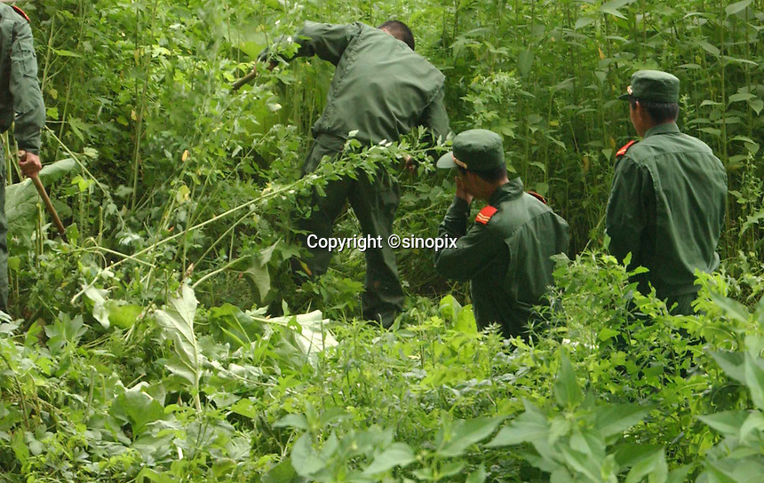 01-AUG-02: NORTH KOREAN BORDER: TUMEN, JILIN, CHINA<br /> Chinese border police sweep the river bank of the Tumen river near the Tumen Bridge border crossing.  There is severe security crack-down in the area aimed at North Korean Refugees.