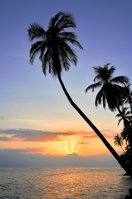 Palm trees and sunset. Lahaina. Maui, Hawaii