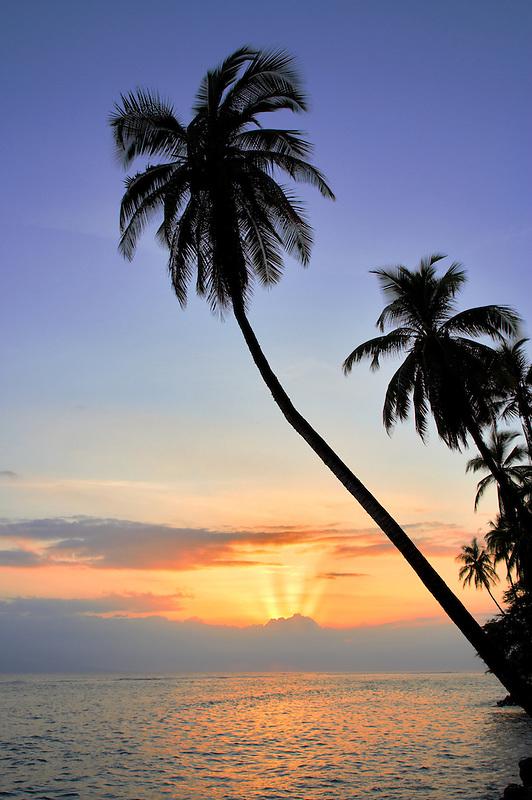 Palm trees and sunset. Lahaina. Maui, Hawaii