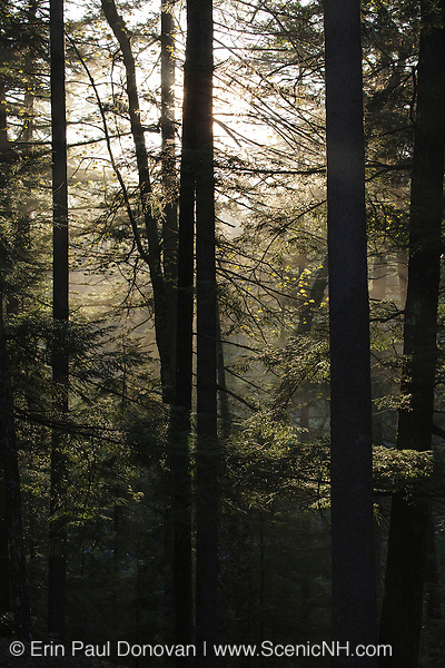Silhouette of forest along the Kancamagus Highway (route 112) in the White Mountains, New Hampshire USA
