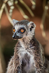 high res team pictures from Madagascar