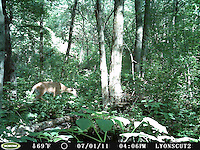 SVT Camera Trap Photos - June 20- August 17, 2011