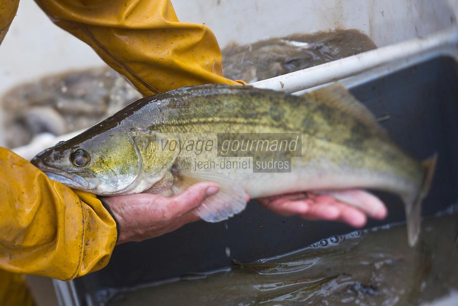 Europe/France/Centre/41/Loir-et-Cher/Sologne/env de Romorantin-Lanthenay: Pêche d'un étang  - Un Sandre<br /> Auto N°:2012-4110 , Auto N°:2012-4111 , Auto N°:2012-4112 , Auto N°:2012-4113<br /> // Europe/France/Centre/41/Loir-et-Cher/Sologne/Near Romorantin-Lanthenay: Fishing pond - Zander<br /> Auto N°:2012-4110 , Auto N°:2012-4111 , Auto N°:2012-4112 , Auto N°:2012-4113