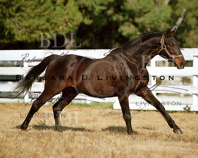 Turkoman, at Mira Loma Thoroughbreds.  January 2004...© 2004 Barbara D. Livingston. All rights reserved. easygoer78@aol.com